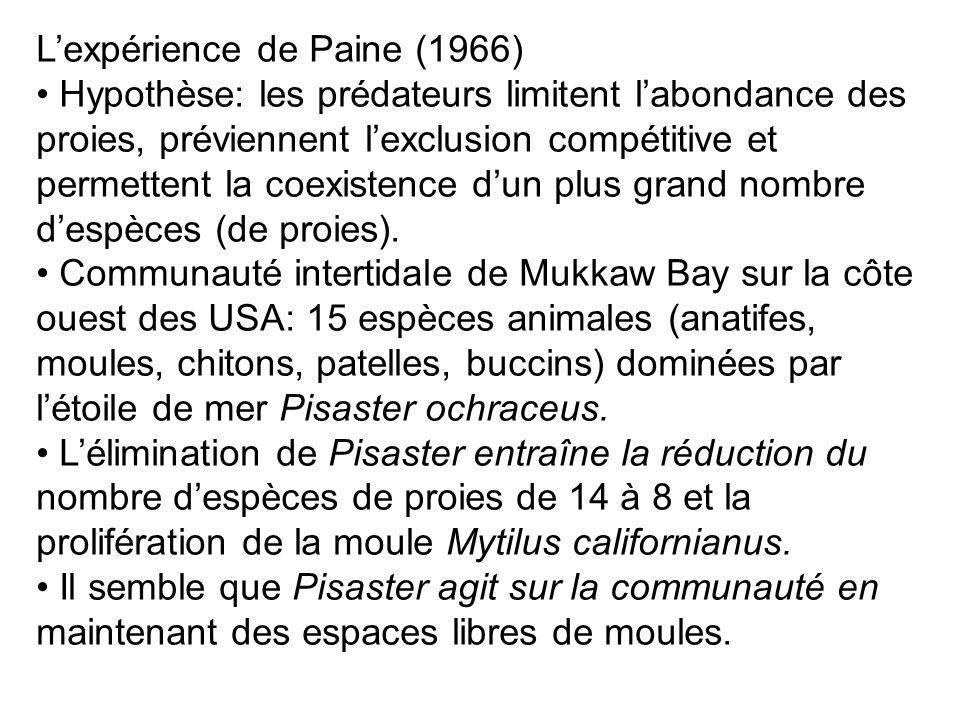 Lexpérience de Paine (1966) Hypothèse: les prédateurs limitent labondance des proies, préviennent lexclusion compétitive et permettent la coexistence dun plus grand nombre despèces (de proies).