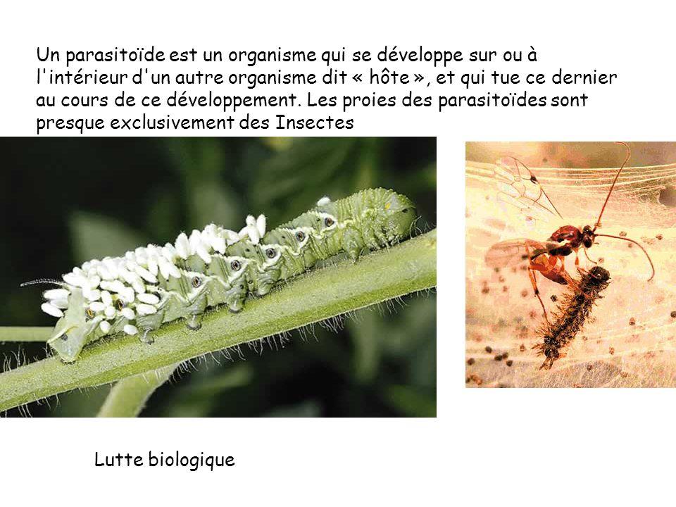 Un parasitoïde est un organisme qui se développe sur ou à l intérieur d un autre organisme dit « hôte », et qui tue ce dernier au cours de ce développement.