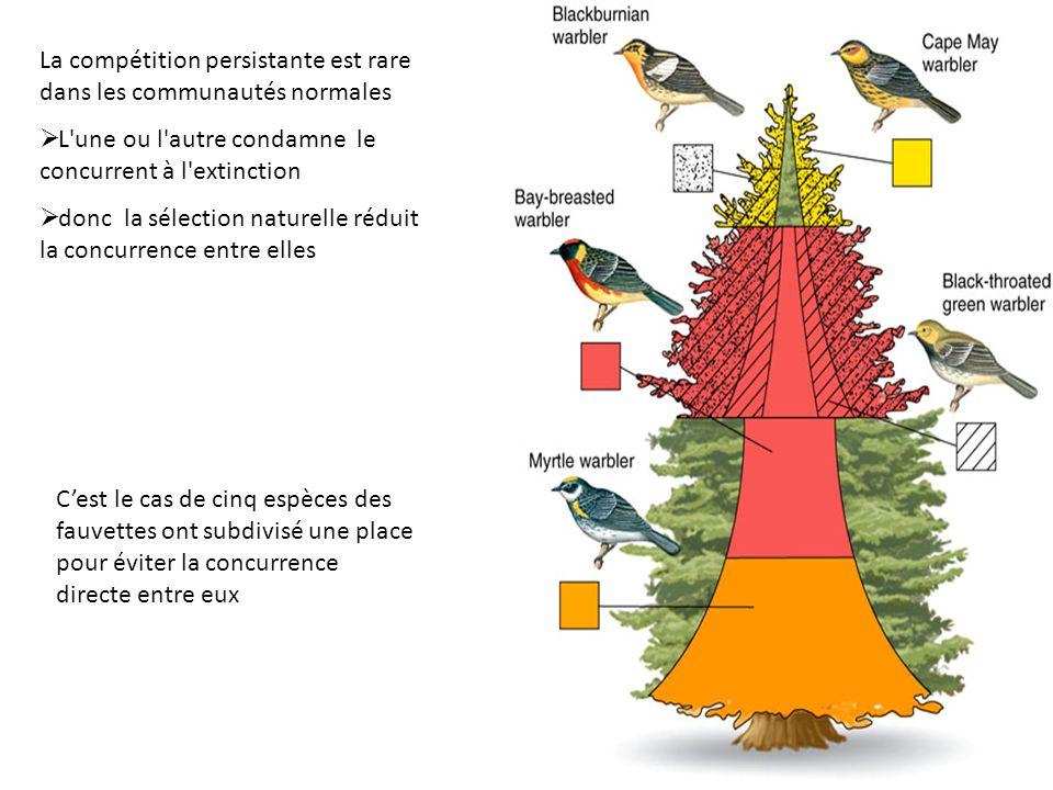 La compétition persistante est rare dans les communautés normales L'une ou l'autre condamne le concurrent à l'extinction donc la sélection naturelle r