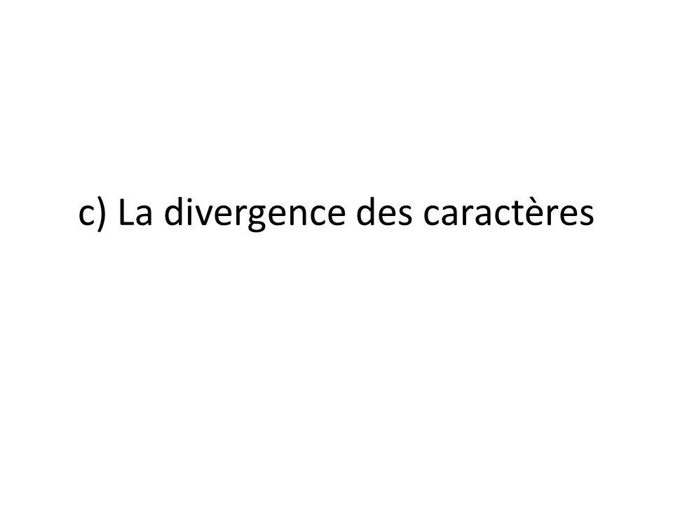 c) La divergence des caractères