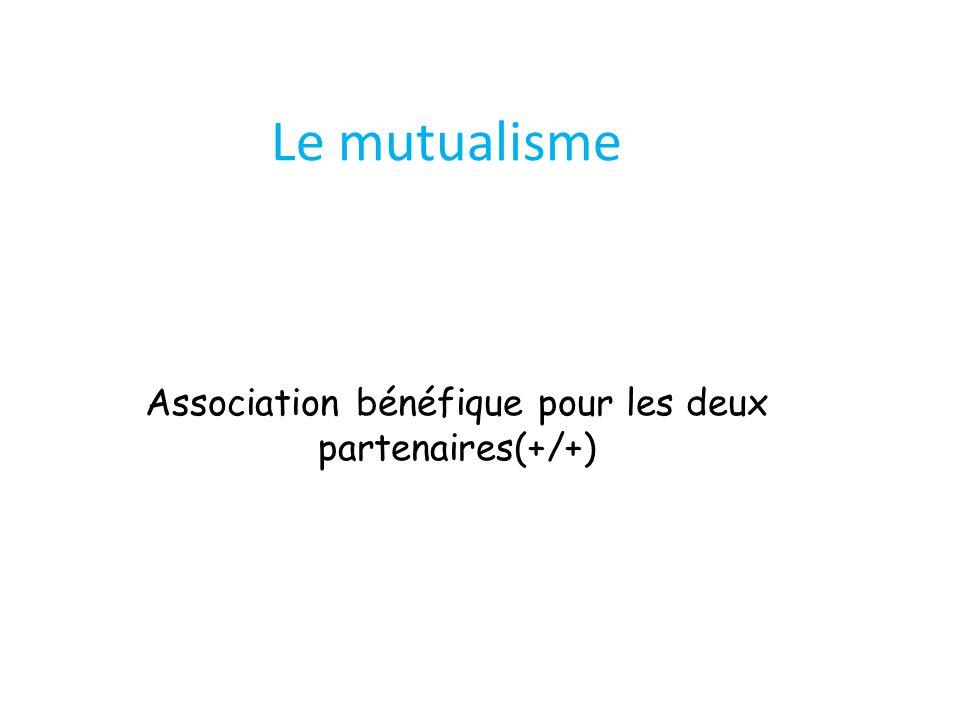 Le mutualisme Association bénéfique pour les deux partenaires(+/+)