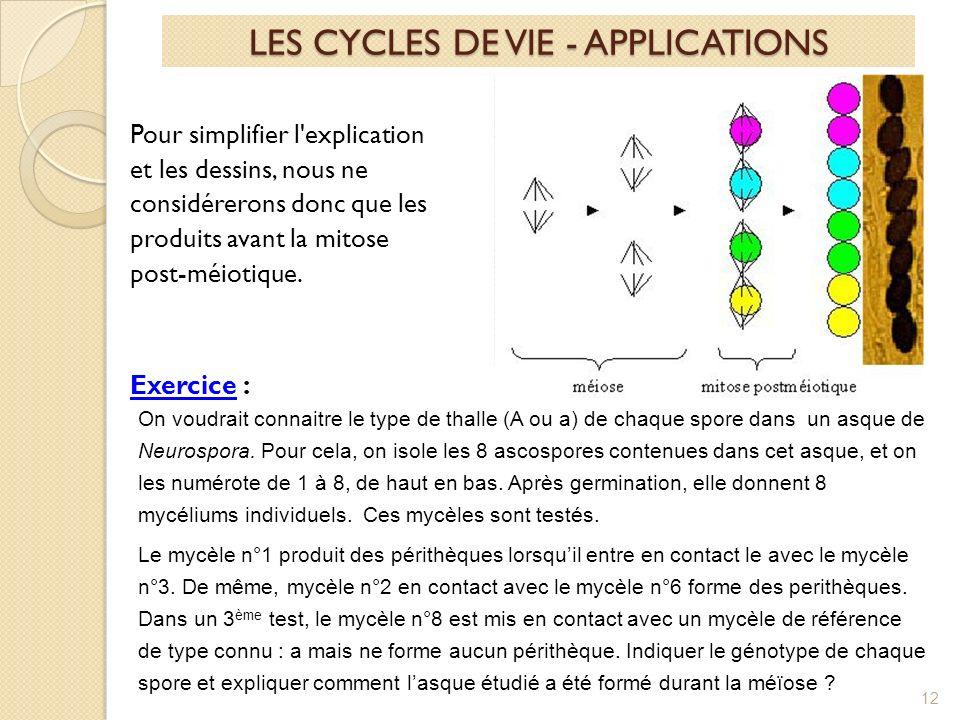 12 LES CYCLES DE VIE - APPLICATIONS Pour simplifier l explication et les dessins, nous ne considérerons donc que les produits avant la mitose post-méiotique.