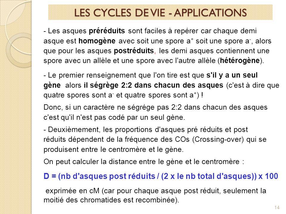 14 LES CYCLES DE VIE - APPLICATIONS - Les asques préréduits sont faciles à repérer car chaque demi asque est homogène avec soit une spore a + soit une spore a -, alors que pour les asques postréduits, les demi asques contiennent une spore avec un allèle et une spore avec l autre allèle (hétérogène).