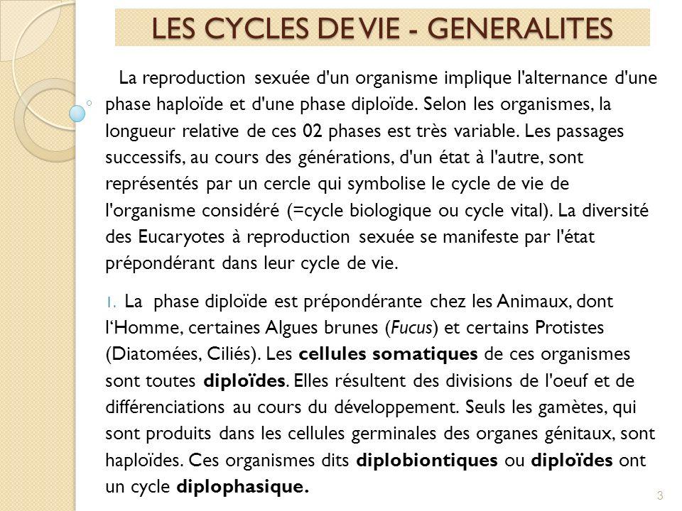 La reproduction sexuée d un organisme implique l alternance d une phase haploïde et d une phase diploïde.