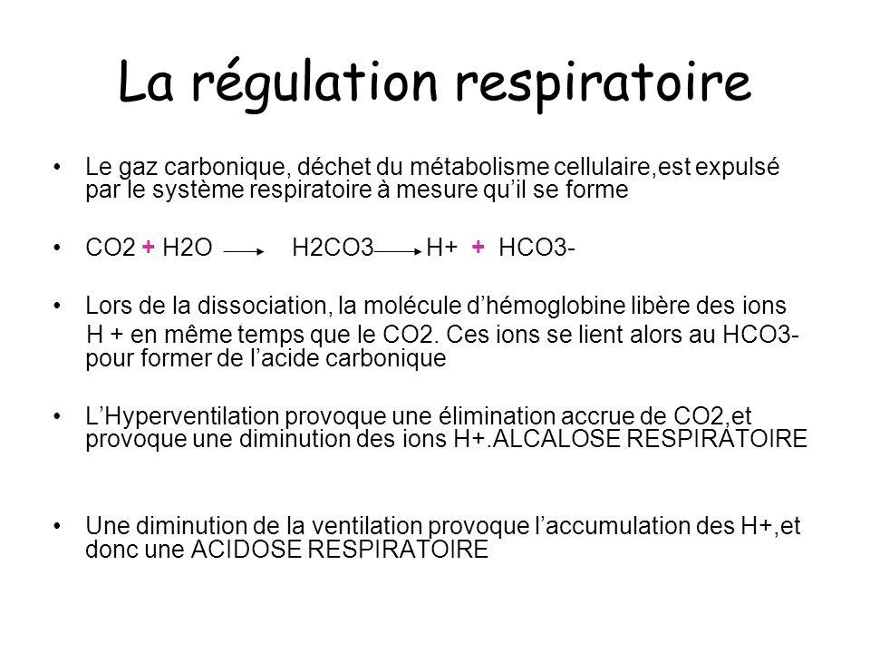 La régulation respiratoire Le gaz carbonique, déchet du métabolisme cellulaire,est expulsé par le système respiratoire à mesure quil se forme CO2 + H2