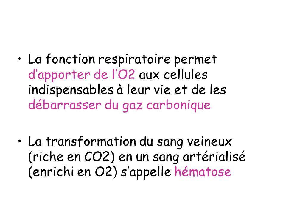 La fonction respiratoire permet dapporter de lO2 aux cellules indispensables à leur vie et de les débarrasser du gaz carbonique La transformation du s