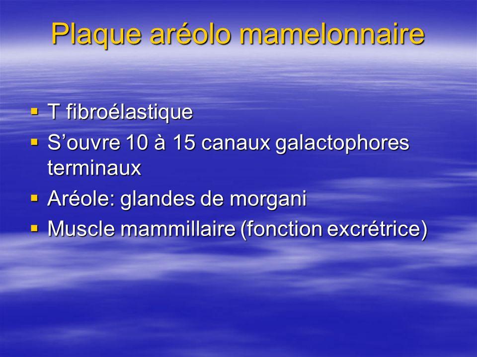 Plaque aréolo mamelonnaire T fibroélastique T fibroélastique Souvre 10 à 15 canaux galactophores terminaux Souvre 10 à 15 canaux galactophores termina