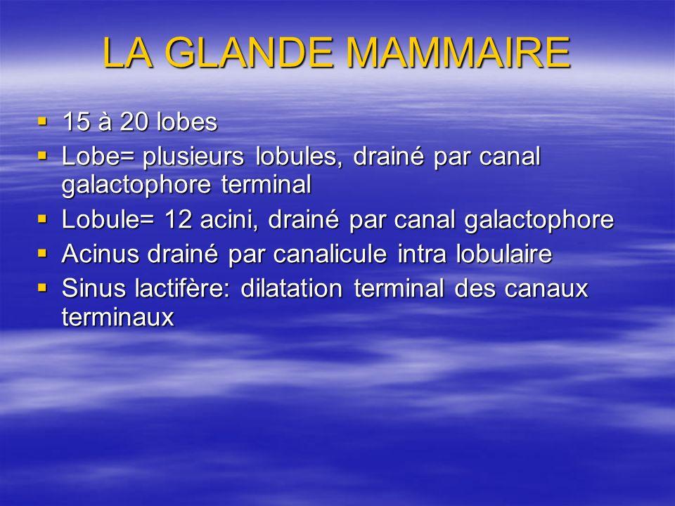 LA GLANDE MAMMAIRE 15 à 20 lobes 15 à 20 lobes Lobe= plusieurs lobules, drainé par canal galactophore terminal Lobe= plusieurs lobules, drainé par can