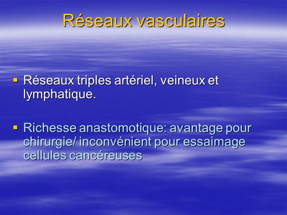 Réseaux vasculaires Réseaux triples artériel, veineux et lymphatique. Réseaux triples artériel, veineux et lymphatique. Richesse anastomotique: avanta