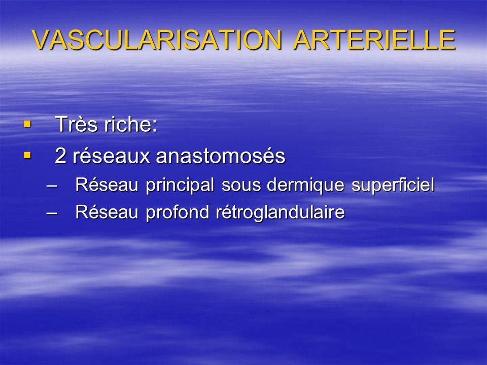 VASCULARISATION ARTERIELLE Très riche: Très riche: 2 réseaux anastomosés 2 réseaux anastomosés –Réseau principal sous dermique superficiel –Réseau pro