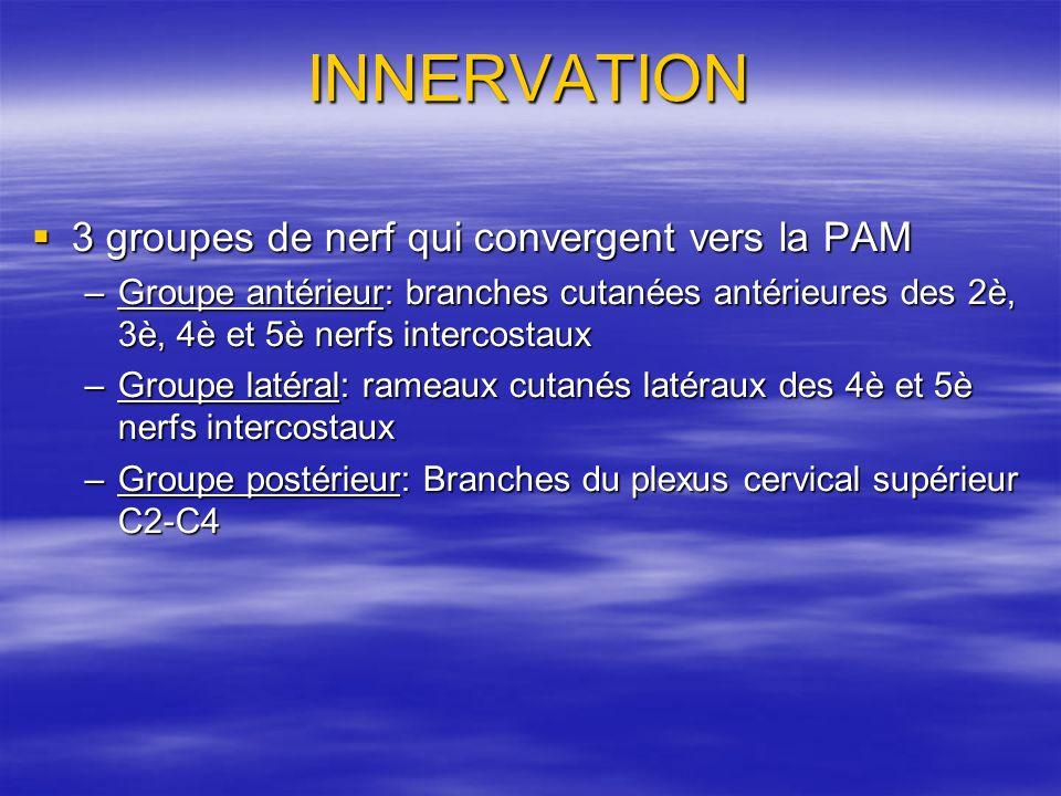 INNERVATION 3 groupes de nerf qui convergent vers la PAM 3 groupes de nerf qui convergent vers la PAM –Groupe antérieur: branches cutanées antérieures