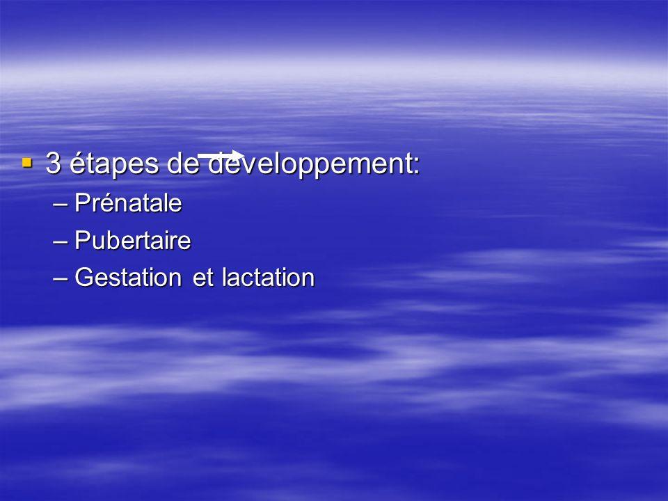 3 étapes de développement: 3 étapes de développement: –Prénatale –Pubertaire –Gestation et lactation