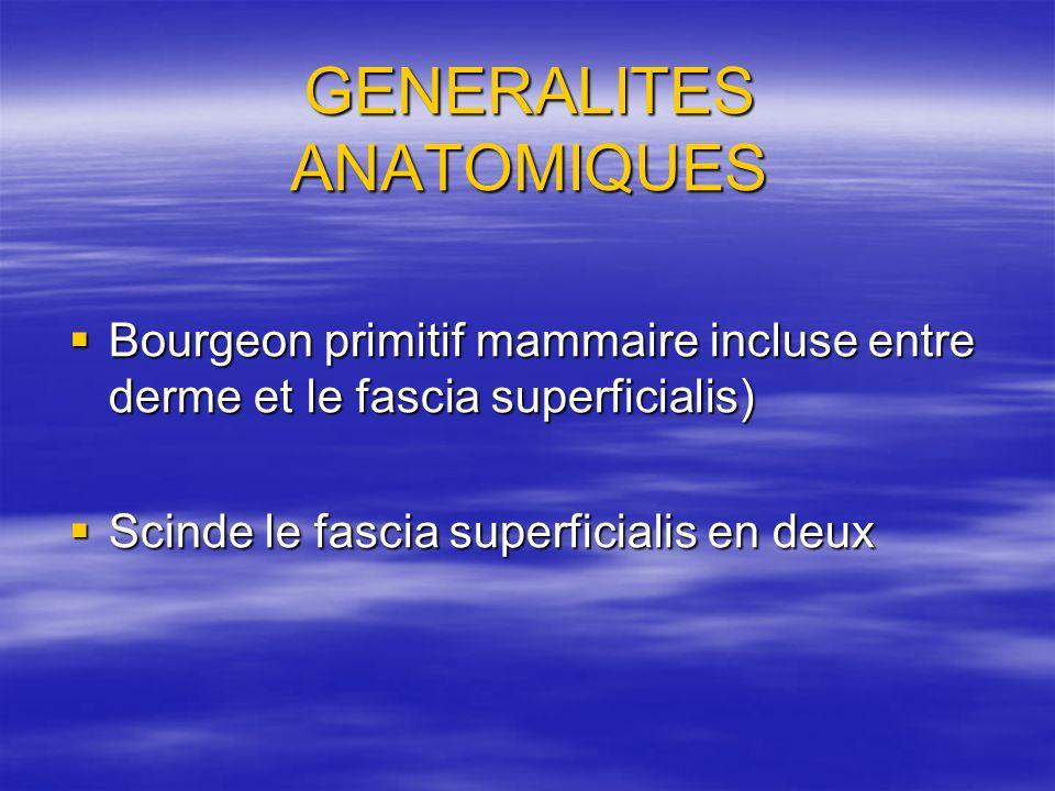 GENERALITES ANATOMIQUES Bourgeon primitif mammaire incluse entre derme et le fascia superficialis) Bourgeon primitif mammaire incluse entre derme et l