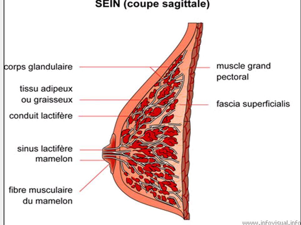 Réseaux vasculaires Réseaux triples artériel, veineux et lymphatique.