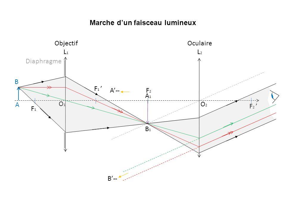 Marche dun faisceau lumineux F1F1 F 1 O1O1 A B Objectif L 1 O2O2 F2F2 F 2 Oculaire L 2 A1A1 B1B1 B A Diaphragme