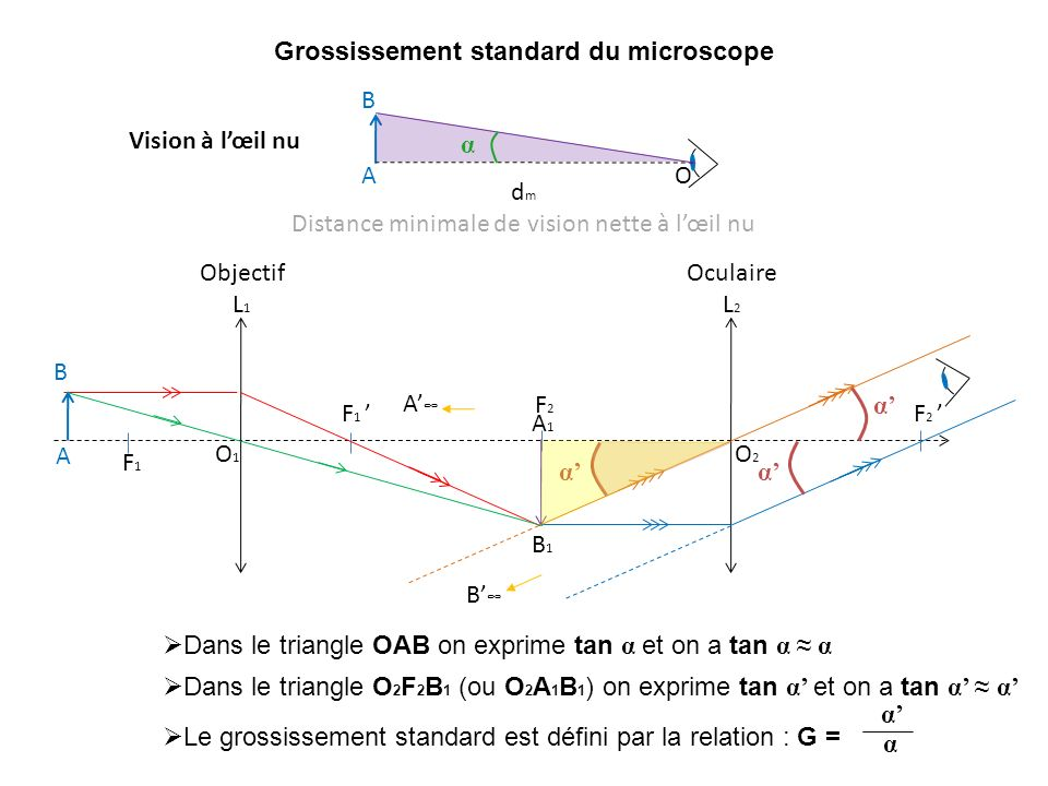 Grossissement standard du microscope F1F1 F 1 O1O1 A B Objectif L 1 O2O2 F2F2 F 2 Oculaire L 2 A1A1 B1B1 A B α α α Dans le triangle O 2 F 2 B 1 (ou O 2 A 1 B 1 ) on exprime tan α et on a tan α α Dans le triangle OAB on exprime tan α et on a tan α α Le grossissement standard est défini par la relation : G = α α d m Distance minimale de vision nette à lœil nu OA B α Vision à lœil nu