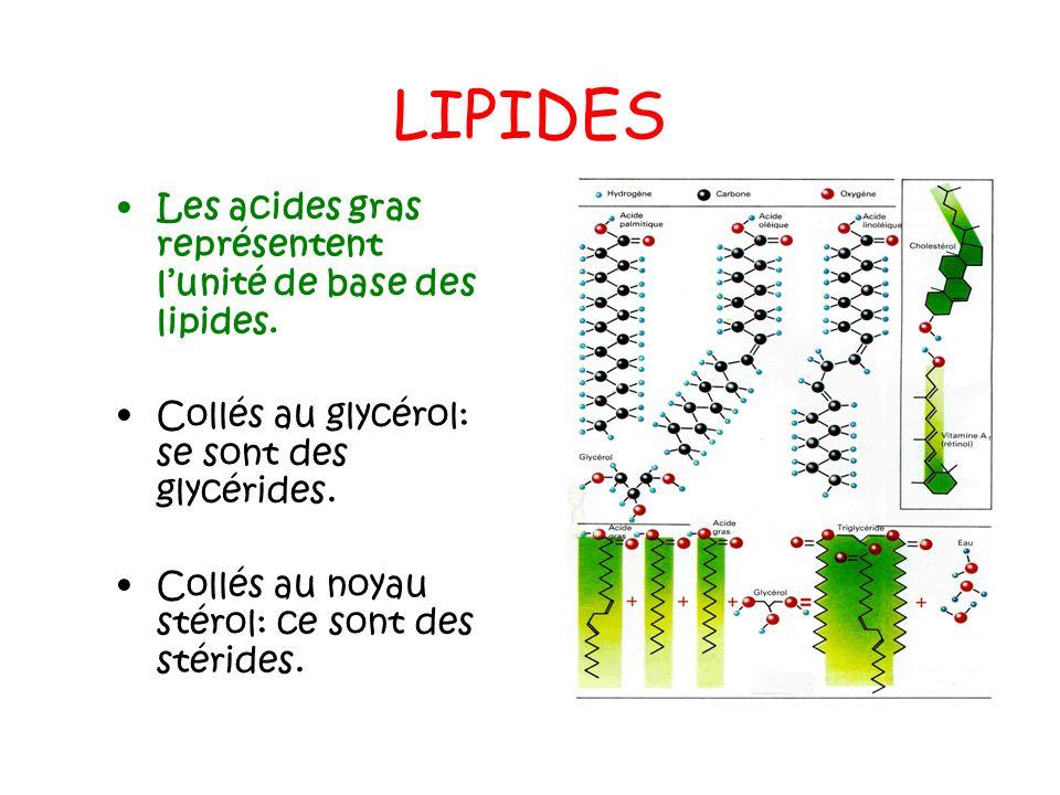 LIPIDES Les acides gras représentent lunité de base des lipides. Collés au glycérol: se sont des glycérides. Collés au noyau stérol: ce sont des stéri