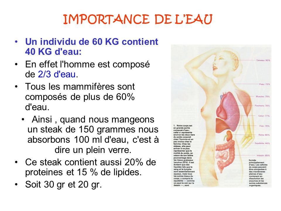 IMPORTANCE DE LEAU Un individu de 60 KG contient 40 KG d'eau: En effet l'homme est composé de 2/3 d'eau. Tous les mammifères sont composés de plus de