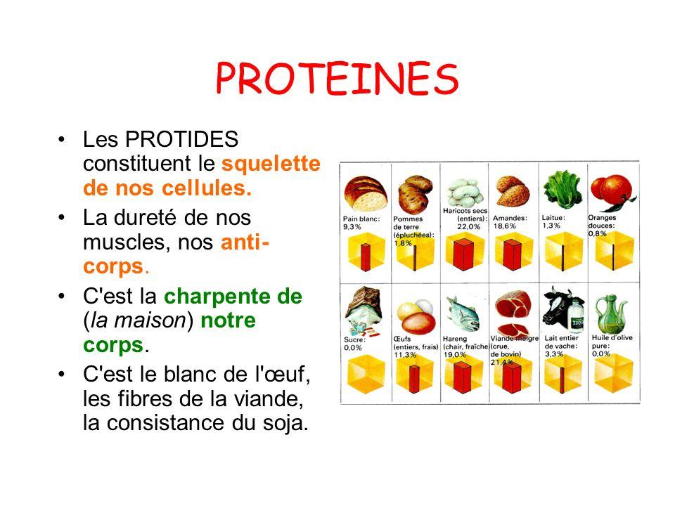 PROTEINES Les PROTIDES constituent le squelette de nos cellules. La dureté de nos muscles, nos anti- corps. C'est la charpente de (la maison) notre co