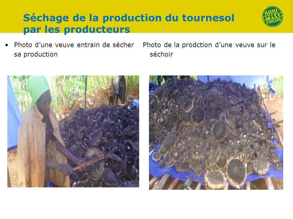 Séchage de la production du tournesol par les producteurs Photo dune veuve entrain de sécher sa production Photo de la prodction dune veuve sur le séc