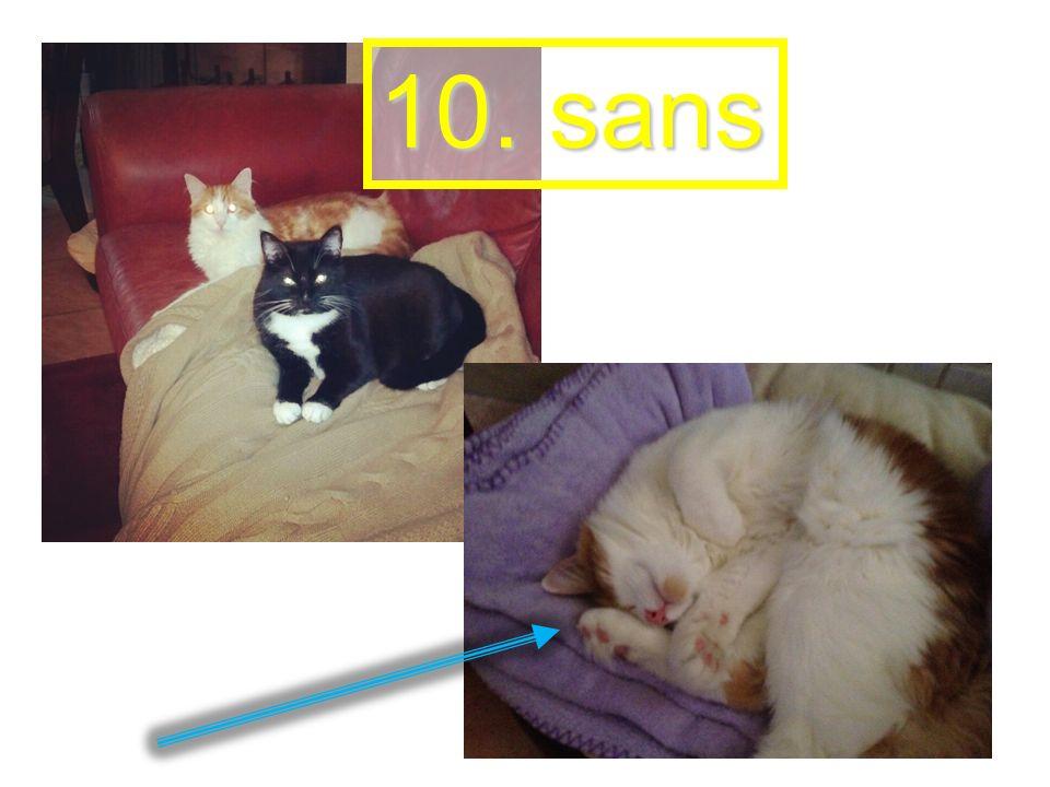 10. sans