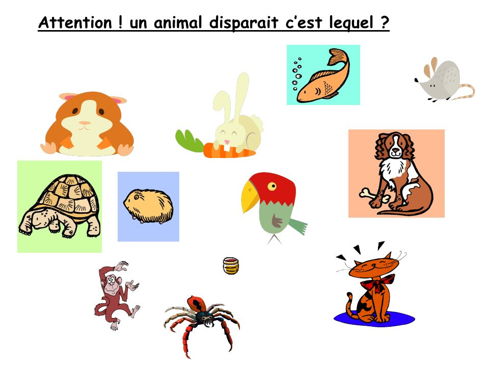 Attention ! un animal disparait cest lequel