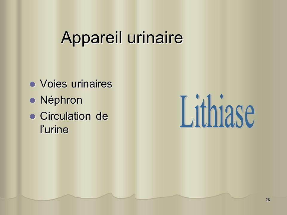 28 Appareil urinaire Voies urinaires Voies urinaires Néphron Néphron Circulation de lurine Circulation de lurine