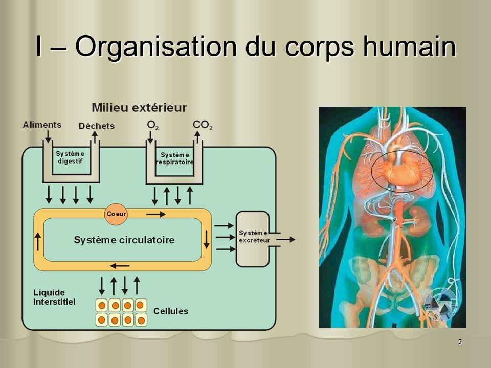 5 I – Organisation du corps humain