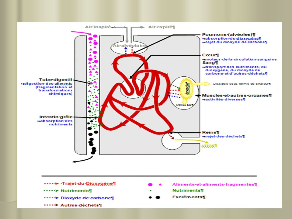 7 II- le mécanisme Obstructif