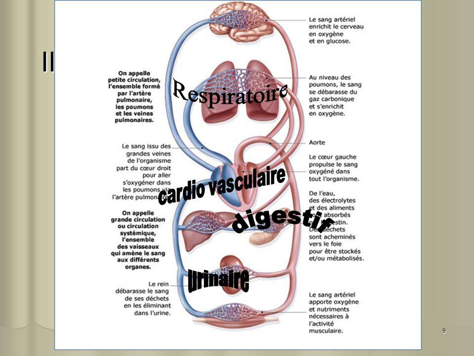 10 Appareil cardio vasculaire Vasomotricité Vasomotricité Athéromatose Athéromatose Thrombose Thrombose Ischémie Ischémie Phlébite Phlébite A.O.MI.