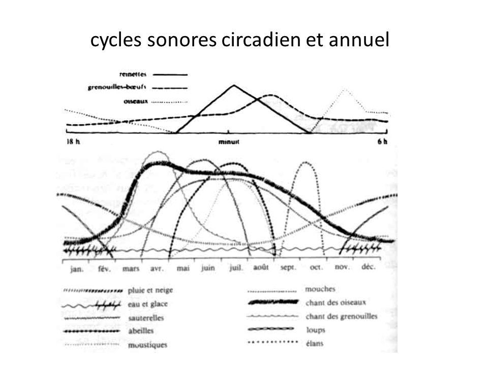 cycles sonores circadien et annuel