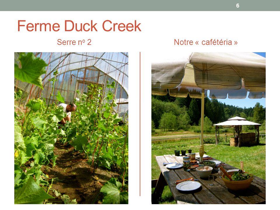 Ferme Duck Creek Serre n o 2Notre « cafétéria » 6