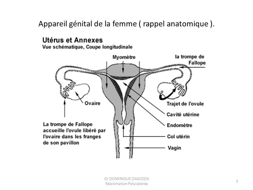 Appareil génital de la femme ( rappel anatomique ). Dr DOMINIQUE ZAGOZDA Réanimation Polyvalente 3
