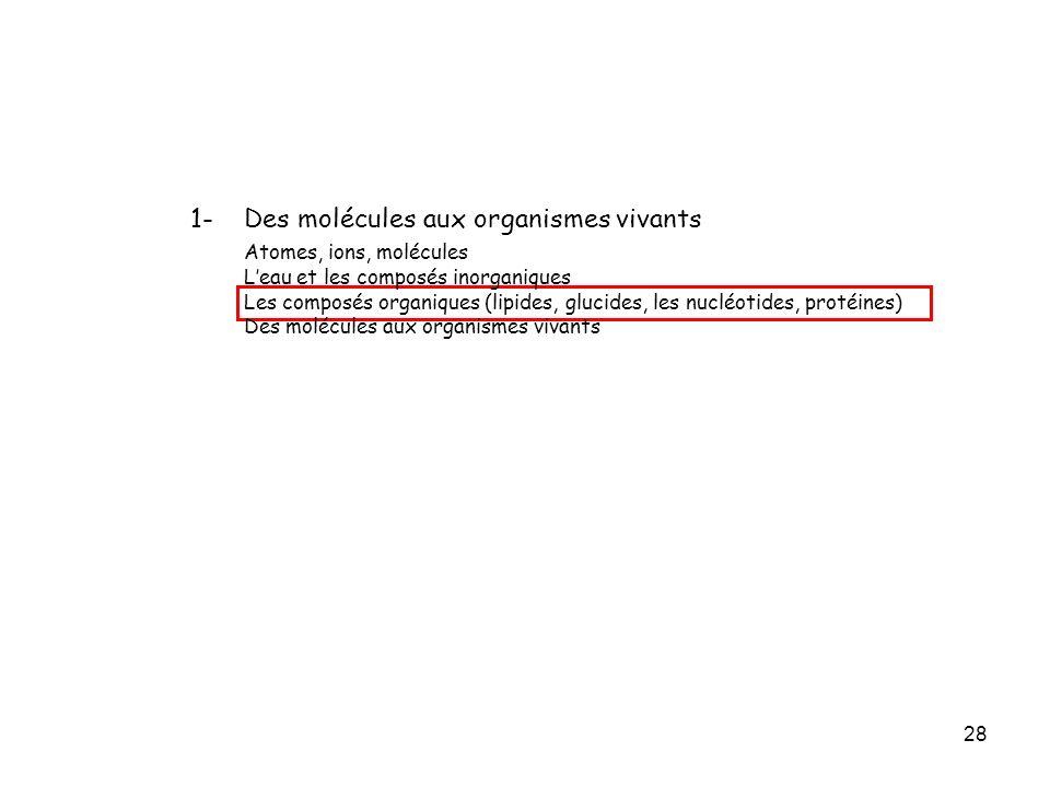 28 1- Des molécules aux organismes vivants Atomes, ions, molécules Leau et les composés inorganiques Les composés organiques (lipides, glucides, les n