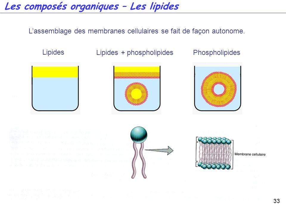 33 Lassemblage des membranes cellulaires se fait de façon autonome. Lipides Lipides + phospholipidesPhospholipides Les composés organiques – Les lipid