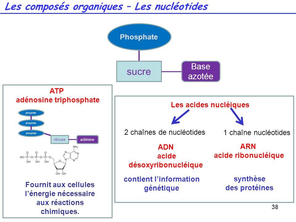 38 Les composés organiques – Les nucléotides sucre Base azotée Phosphate ATP adénosine triphosphate riboseadénine phosphate Fournit aux cellules léner