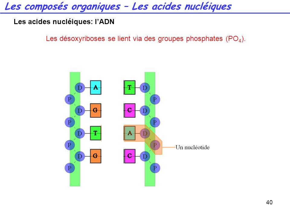 40 Les désoxyriboses se lient via des groupes phosphates (PO 4 ). Les composés organiques – Les acides nucléiques Les acides nucléiques: lADN