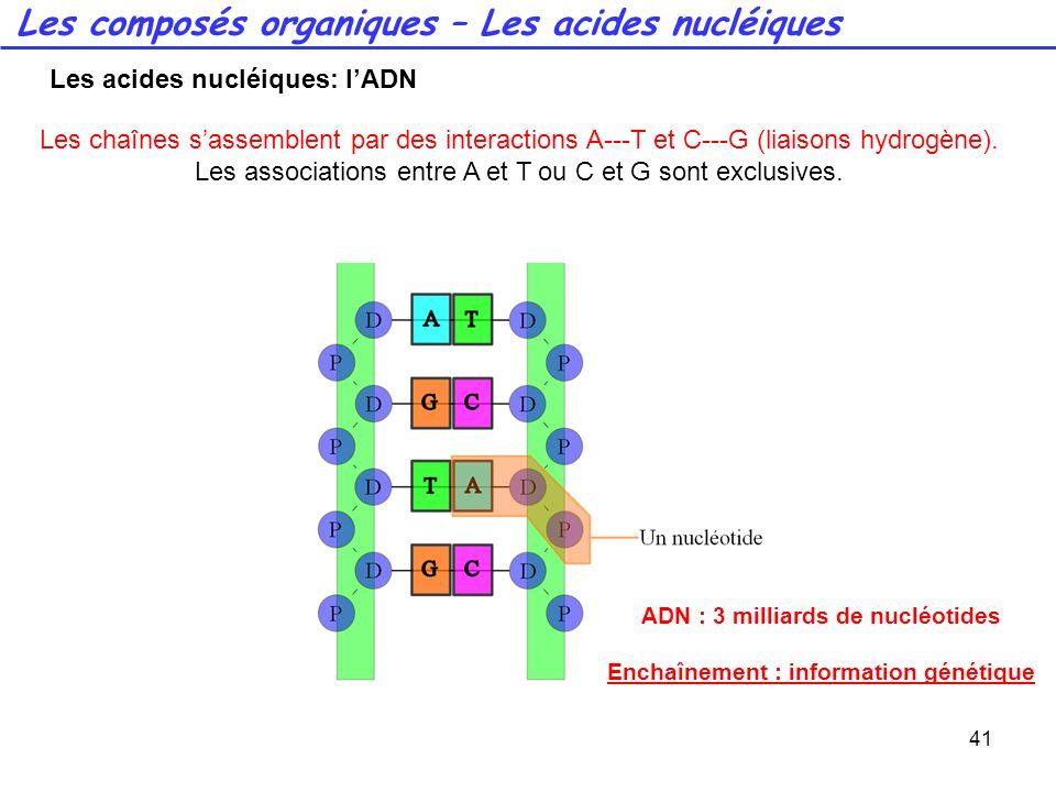41 Les chaînes sassemblent par des interactions A---T et C---G (liaisons hydrogène). Les associations entre A et T ou C et G sont exclusives. ADN : 3