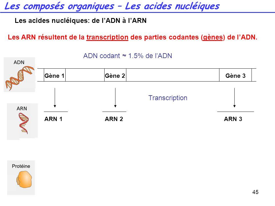 45 Les ARN résultent de la transcription des parties codantes (gènes) de lADN. Transcription Gène 1Gène 2Gène 3 ARN 1ARN 2ARN 3 ADN codant 1.5% de lAD