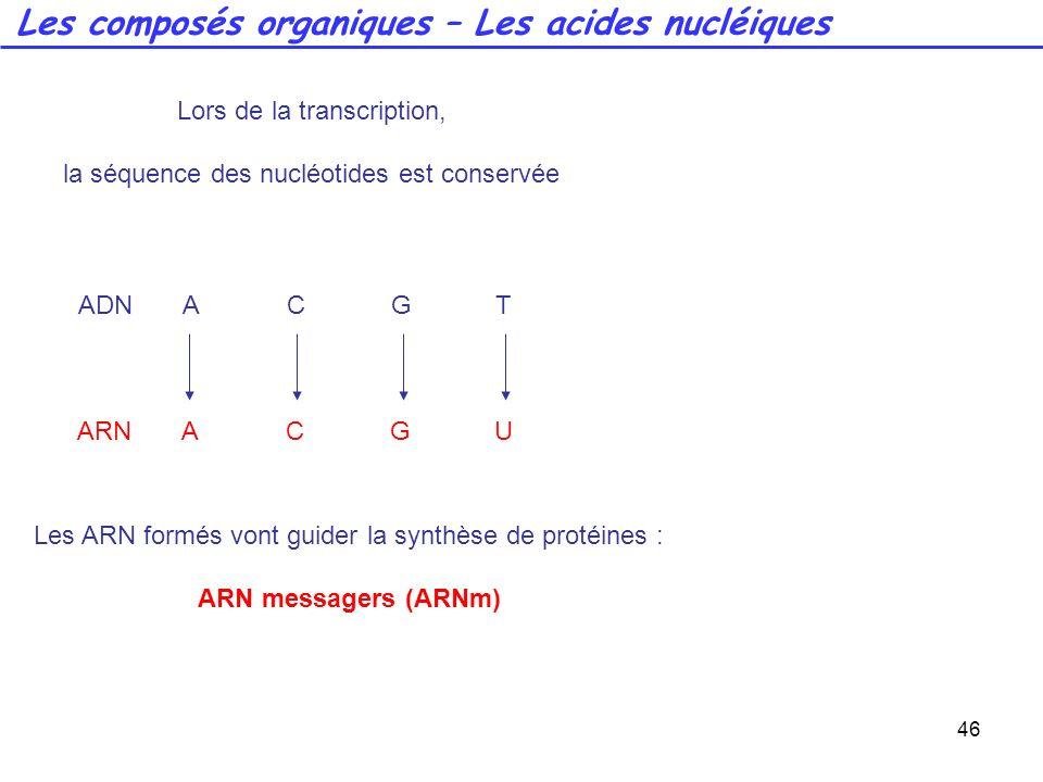 46 Lors de la transcription, la séquence des nucléotides est conservée ADNACGT ARNACGU Les ARN formés vont guider la synthèse de protéines : ARN messa