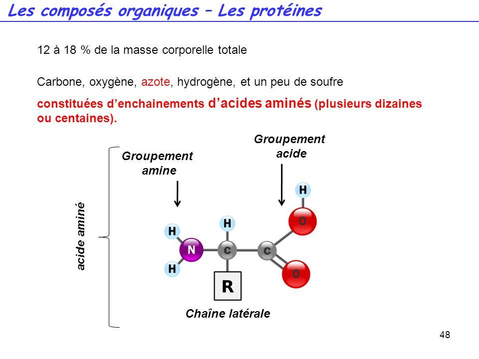 Groupement acide 48 12 à 18 % de la masse corporelle totale Carbone, oxygène, azote, hydrogène, et un peu de soufre Les composés organiques – Les prot