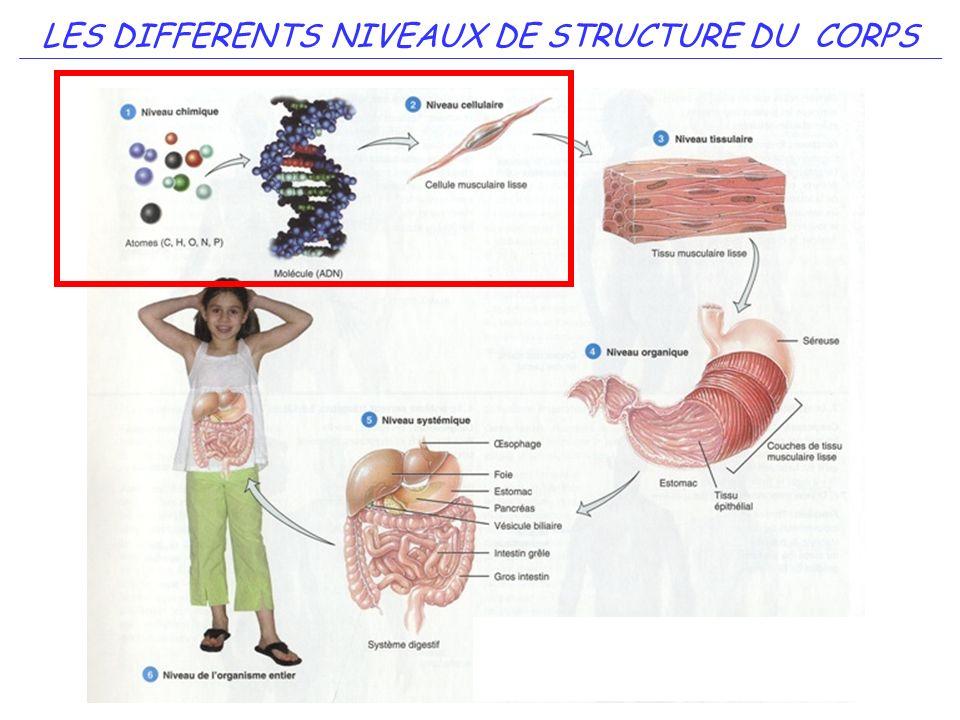 5 LES DIFFERENTS NIVEAUX DE STRUCTURE DU CORPS