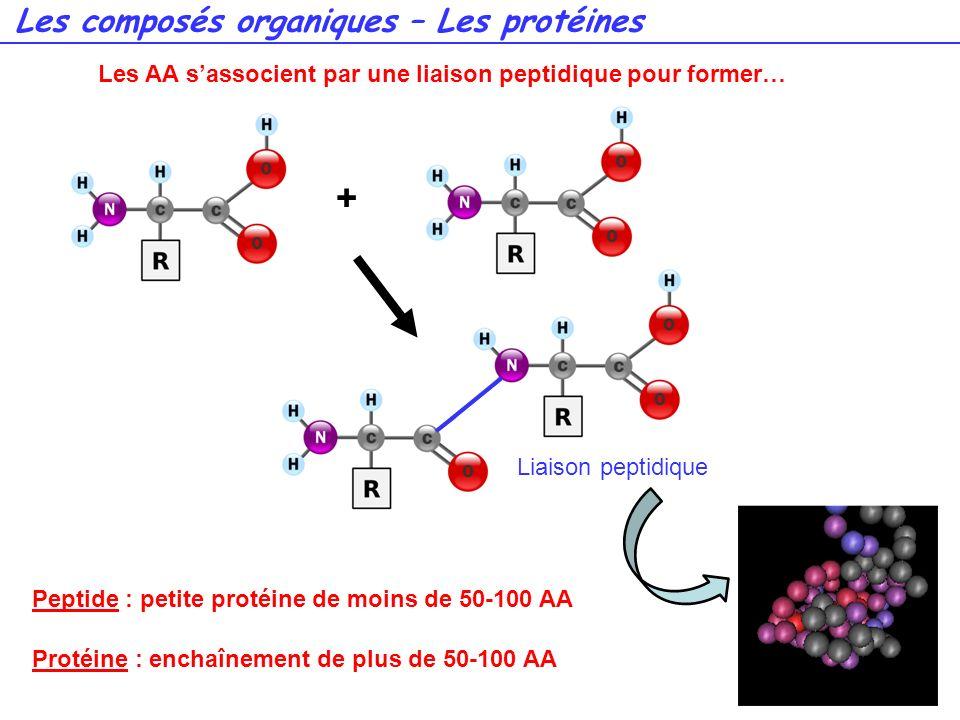 50 + Liaison peptidique Peptide : petite protéine de moins de 50-100 AA Protéine : enchaînement de plus de 50-100 AA Les composés organiques – Les pro