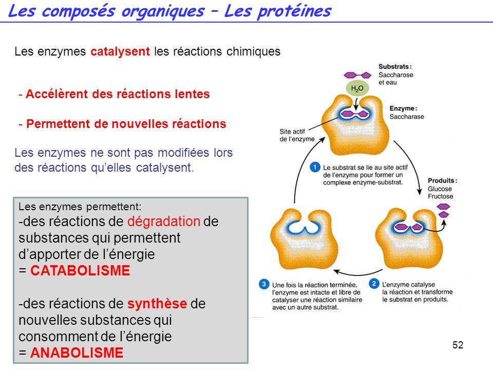 52 Les enzymes catalysent les réactions chimiques - Accélèrent des réactions lentes - Permettent de nouvelles réactions Les enzymes ne sont pas modifi