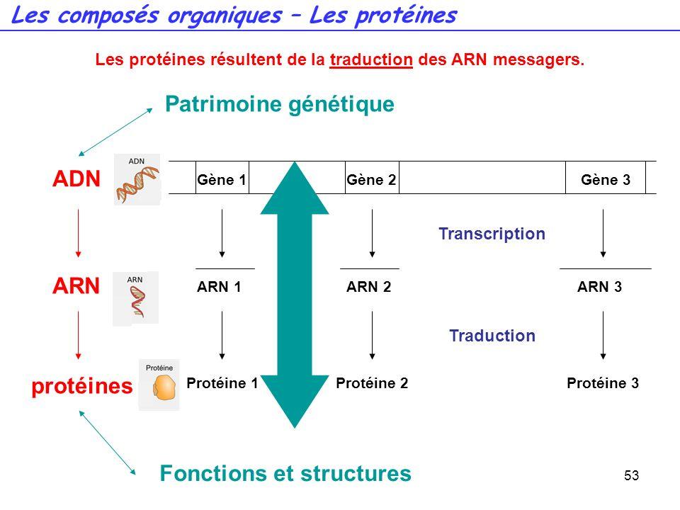 53 Transcription Gène 1Gène 2Gène 3 ARN 1ARN 2ARN 3 Traduction Protéine 1 Protéine 2Protéine 3 ADN ARN protéines Patrimoine génétique Fonctions et str