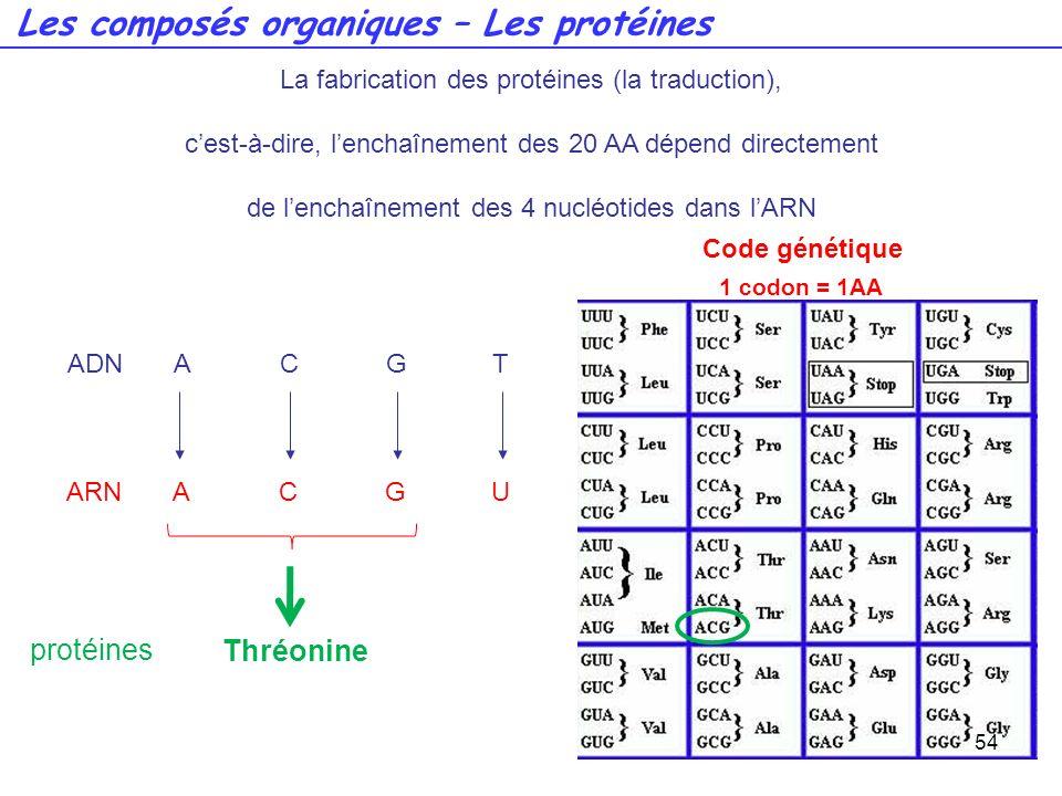 ADNACGT ARNACGU Code génétique 1 codon = 1AA 54 La fabrication des protéines (la traduction), cest-à-dire, lenchaînement des 20 AA dépend directement