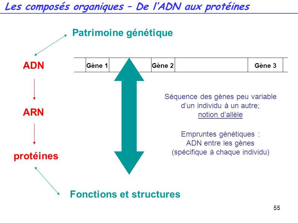 55 Gène 1Gène 2Gène 3 ADN ARN protéines Patrimoine génétique Fonctions et structures Séquence des gènes peu variable dun individu à un autre; notion d