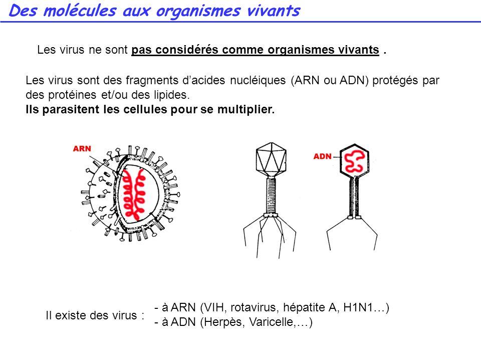Des molécules aux organismes vivants Les virus sont des fragments dacides nucléiques (ARN ou ADN) protégés par des protéines et/ou des lipides. Ils pa