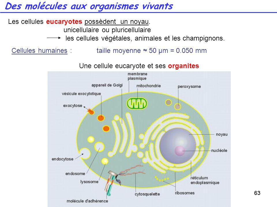 63 Des molécules aux organismes vivants 63 Les cellules eucaryotes possèdent un noyau. unicellulaire ou pluricellulaire les cellules végétales, animal