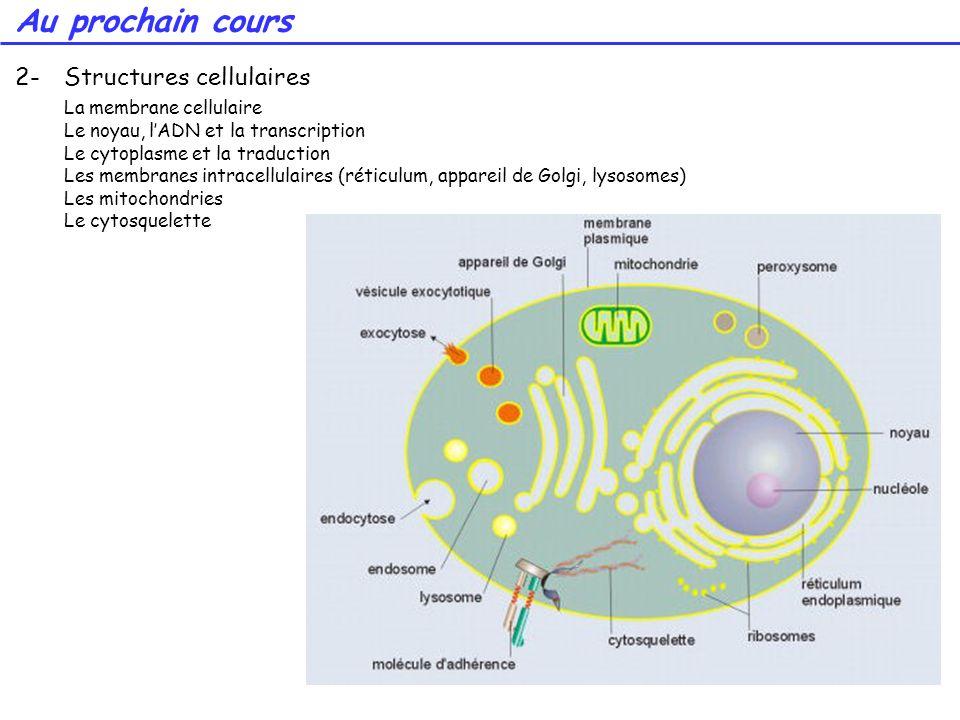 64 2-Structures cellulaires La membrane cellulaire Le noyau, lADN et la transcription Le cytoplasme et la traduction Les membranes intracellulaires (r